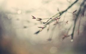 nature, blurred, bokeh, branch