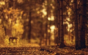 blurred, brown, nature, bench