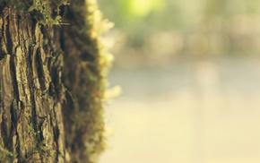 trees, nature, blurred, bokeh, depth of field