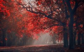 leaves, nature, park, landscape, trees, mist