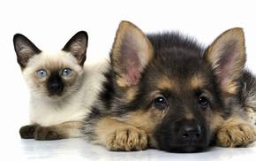 puppies, dog, cat