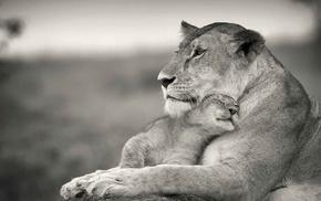 love, lion, puppies