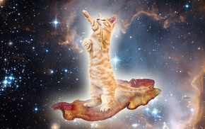 surreal, cat, space, bacon, animals