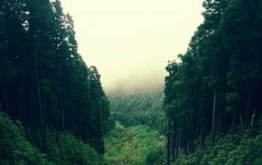 forest, forest clearing