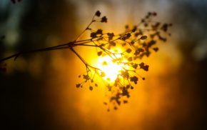 plants, glowing, blurred, silhouette, sunlight, bokeh