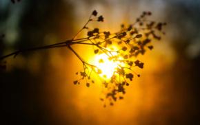plants, glowing, blurred, silhouette, sunlight, bokeh