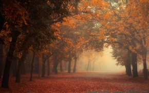 red, fall, tunnel, trees, mist, morning