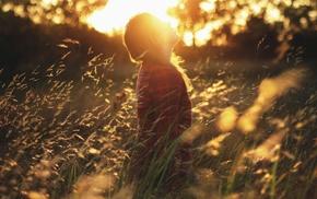 grass, sun rays, depth of field, photography, bokeh, field