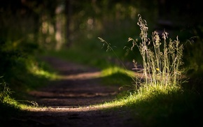 grass, sunlight, depth of field, photography, blurred