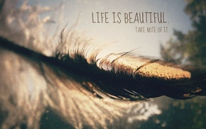 blurred, quote, depth of field, bokeh, feathers