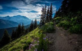 path, sunrise, snowy peak, landscape, dirt road, wildflowers