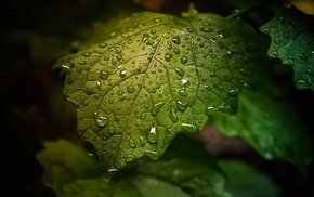 plants, dew, nature, sheet, leaves, water