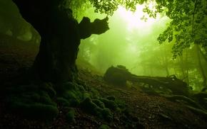 sunlight, forest, moss, green, nature, trees