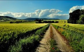 nature, farm, dirt road, path, landscape