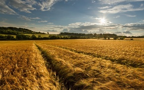 landscape, nature, farm, wheat