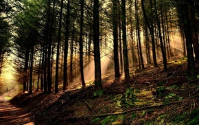 sun rays, forest, leaves, dirt road, roots, moss