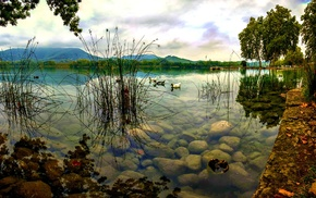 trees, birds, nature, animals, pier, lake