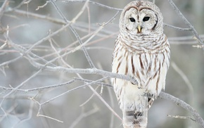 branch, birds, owl