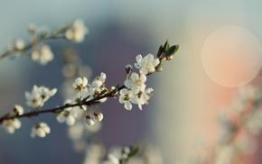 flowers, white flowers, macro