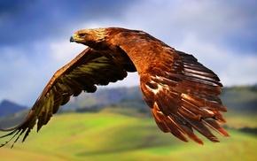 birds, wings, nature, landscape, feathers, eagle