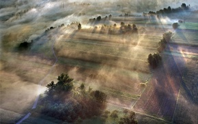 morning, trees, landscape, field, sunlight, sunrise