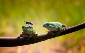 amphibian, animals, wildlife, nature, frog, insect