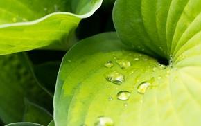 water drops, nature, plants, leaves, macro