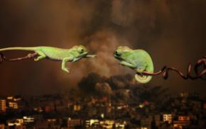 war, love, animals, chameleons