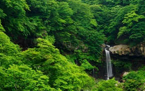 landscape, tropical forest, forest, waterfall, nature