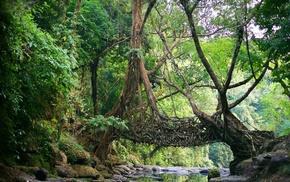 nature, India, Natural Engineering, Shillong, jungles, Meghalaya
