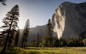 sunlight, cliff, trees, nature
