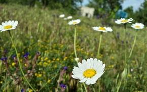 flowers, grass