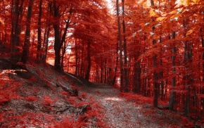 hill, forest, nature, landscape, fall, trees