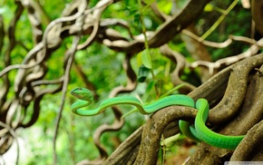 animals, reptile, wildlife, snake, depth of field