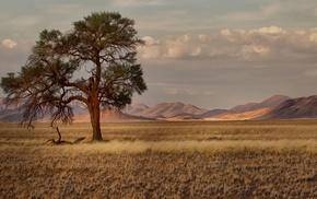 landscape, plains, trees