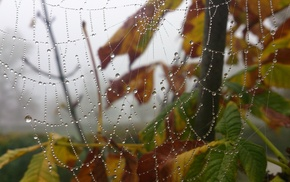 morning, trees, leaves, fall, spiderwebs, depth of field