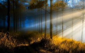 mist, trees, sunrise, sun rays, sunlight, grass