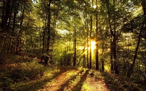 trees, grass, nature, leaves, sun rays, forest