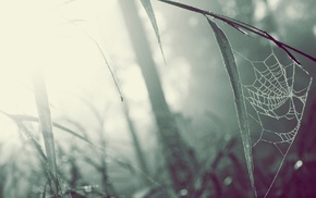 photography, depth of field, grass, macro, blurred, spiderwebs
