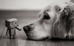 depth of field, Danbo, dog, macro, blurred, photography