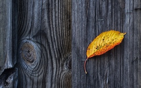wood, texture, leaves, nature, fall, wooden surface