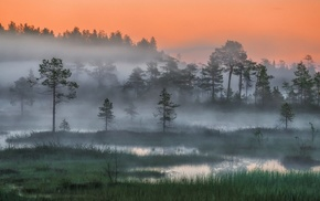 Russia, sunset, night, trees, landscape, Arctic