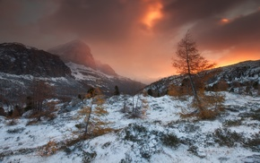 cold, mountain, forest, snow, storm, mist
