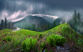 rain, forest, spring, China, landscape, mountain
