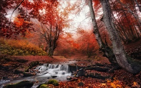 landscape, leaves, morning, fall, red, forest