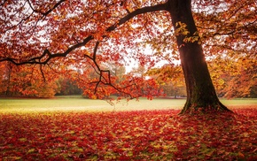 park, fall, nature, landscape, red, leaves