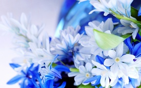 macro, flowers, plants, nature, blue flowers, closeup