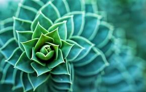 plants, macro, succulents