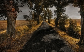 grass, shadow, nature, road, trees, field