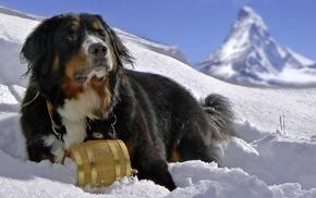 dog, Bernese Mountain Dog, Sennenhund, snow, animals